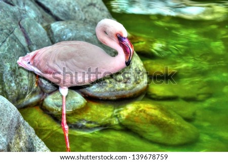 beautiful pink flamingo standing on one leg in High Dynamic Range hdr. - stock photo