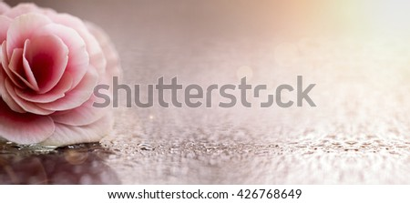 Beautiful pink  flower banner with copy space - stock photo