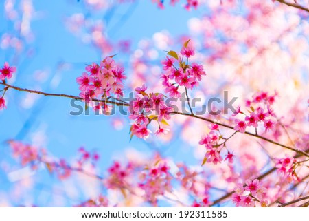 Beautiful pink flower blossom - stock photo