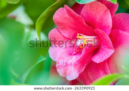 Beautiful pink flower close-up, very shallow DOF. - stock photo