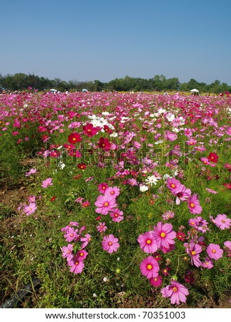Beautiful pink flower garden at Jim Thompson's farm, Thailand