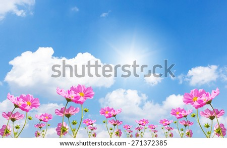 Beautiful pink flowers and Blue sky with cloud - stock photo