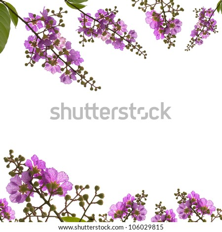beautiful pink flowers isolated - stock photo