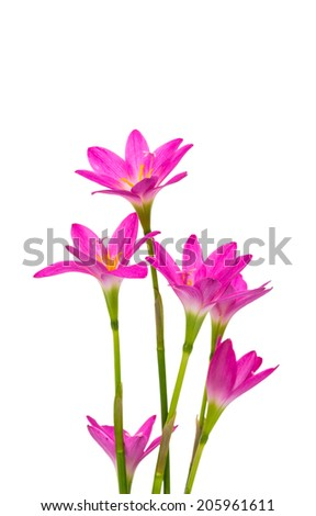 Beautiful pink flowers isolated on white background