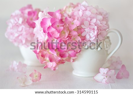 Beautiful pink hydrangea flowers close-up in a ceramic jug on a light background.  - stock photo