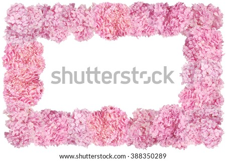 Beautiful Pink hydrangeas flower frame. Natural color. Isolated on white