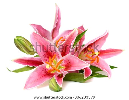 beautiful pink lily bouquet isolated on white background
