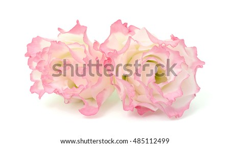 beautiful pink Lisianthus flowers isolated on white background