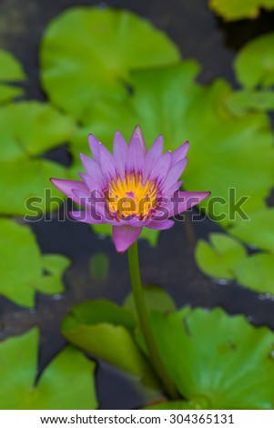 Beautiful pink lotus flower with space on background vertical style