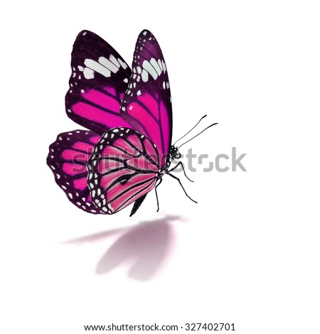 Beautiful pink monarch butterfly isolated on white background - stock photo
