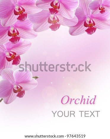 Beautiful pink orchid.