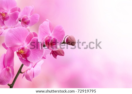 beautiful pink orchid flower - stock photo