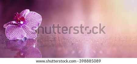Beautiful pink orchid flower banner with copy space - stock photo