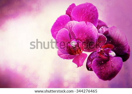 Beautiful pink orchid flower, close up - stock photo