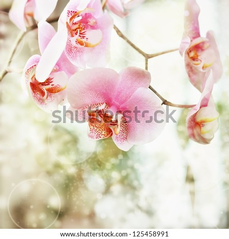 Beautiful pink orchid flowers background - stock photo