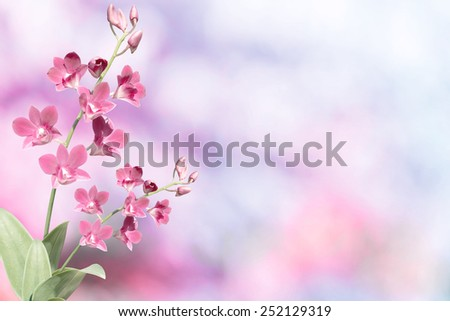 Beautiful pink orchid in green tropical forest bokeh - stock photo