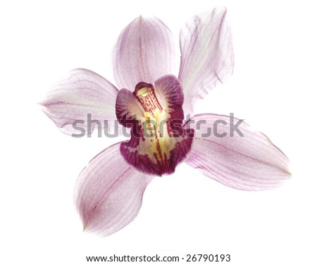 Beautiful pink orchid isolated on white - stock photo