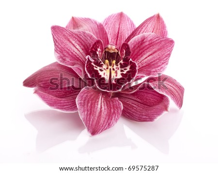 beautiful pink orchid isolated on  white background - stock photo
