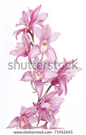 Beautiful pink orchid isolated over white background - stock photo