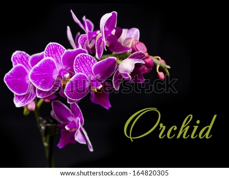 Beautiful pink orchid on dark background - stock photo