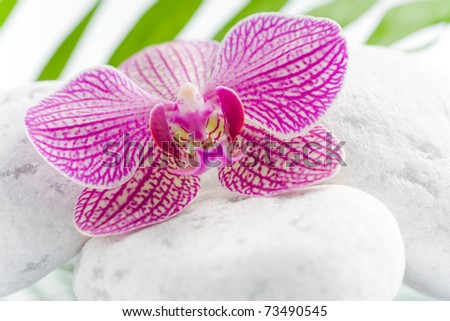 beautiful pink orchid with white stones on a harmony scene - stock photo