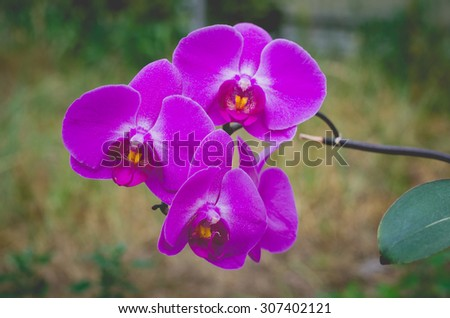 Beautiful pink orchids on a branch