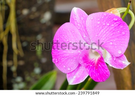 Beautiful pink orchids on nature background