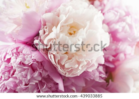 Beautiful pink peonies in white vase