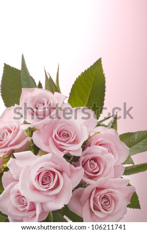 beautiful pink rose bouquet on bright pink - stock photo
