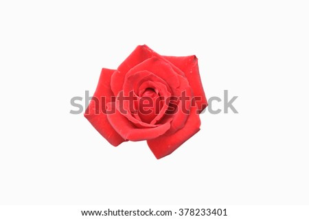 Beautiful pink rose isolated on white background. selective focus - stock photo