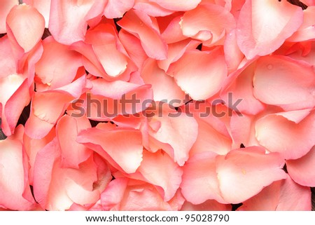Beautiful pink Rose petals, close up - stock photo
