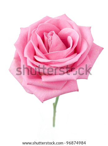 Beautiful pink rose with leaves isolated on white - stock photo