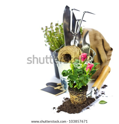 Beautiful pink roses and garden tools  isolated on white - stock photo
