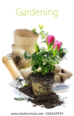 Beautiful pink roses and garden tools  isolated on white (with easy removable text) - stock photo