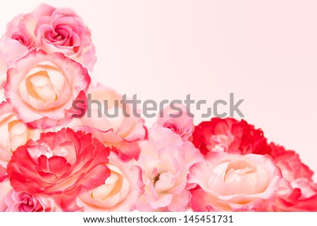 Beautiful pink roses on pink background