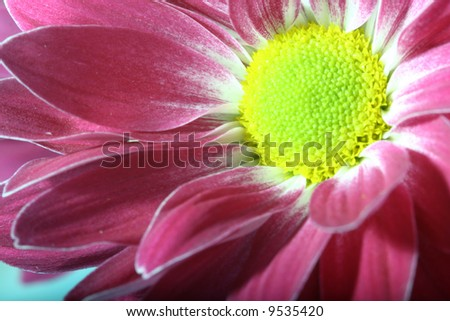 beautiful pink spring flower close-up