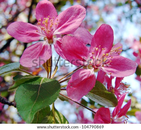 beautiful pink spring flowers