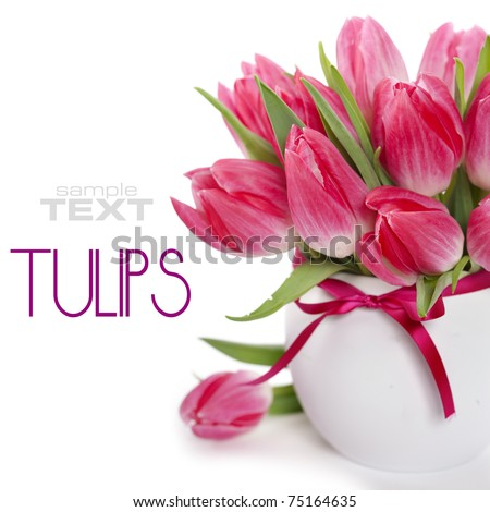 Beautiful pink tulips in a vase on a white background (with sample text) - stock photo