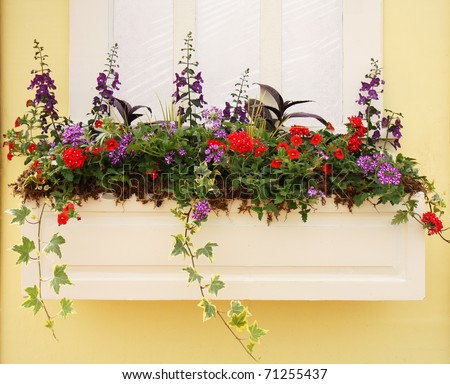Beautiful planter outside a window with spring petunia for Beautiful planters