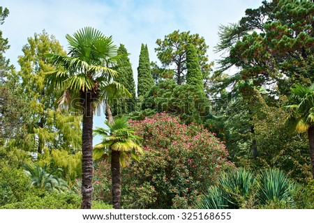 Beautiful plants and trees in tropical park at summer
