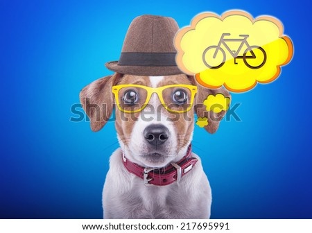 Beautiful playful dog on a blue background. Collection of animals. The dream of a bike - stock photo