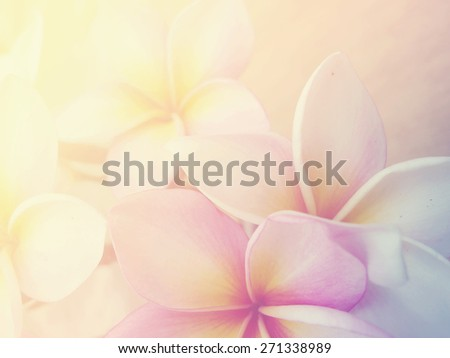 Beautiful Plumeria Frangini Flowers in Soft Focus and Pastel Filtered Image Background Design. - stock photo