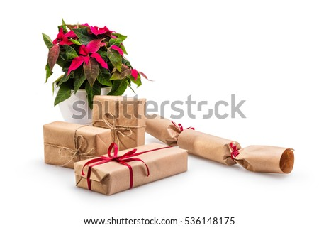 Beautiful poinsettia on white background. Christmas tratition flower. Christmas gift boxes composition