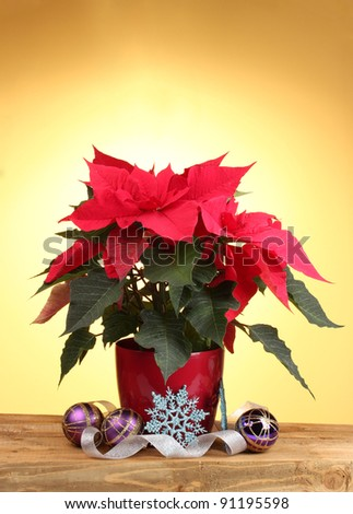 Beautiful poinsettia with christmas balls on wooden table on yellow background