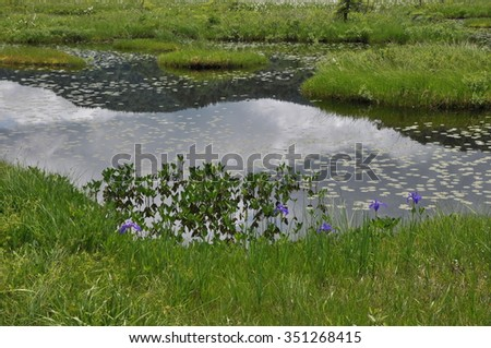 Beautiful pond in damp ground Oze national park in Japan