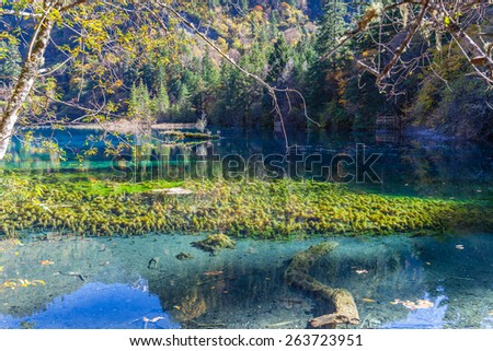 Beautiful pond in Jiuzhaigou national park, Sichuan Province, China - stock photo