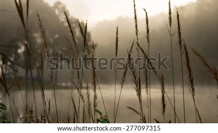 Beautiful pond in the forest-covered morning fog - stock photo