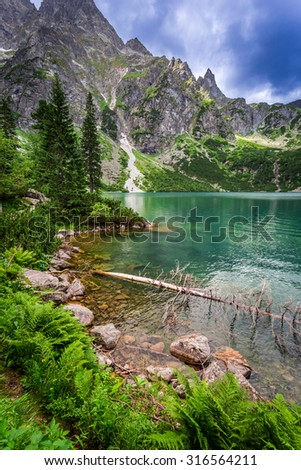 Beautiful pond in the mountains at summer