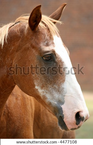 Beautiful portrait close up of a chestnut horse. Extremely expressive, great detail - you can see the reflection of a fence and a field in its eyes. - stock photo
