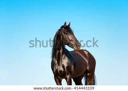 Beautiful portrait of a black horse on a background of blue sky